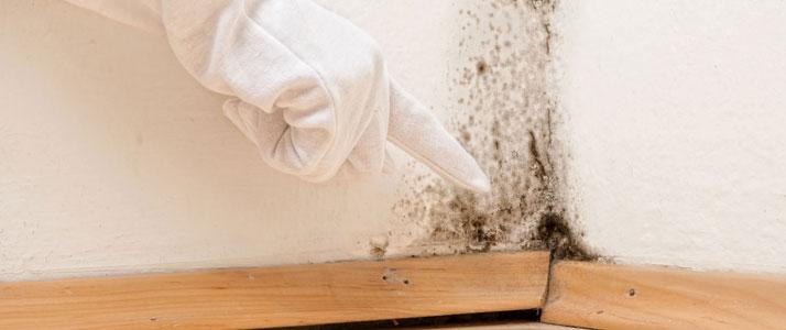 Allstar Insulation - Prevent Mold & Mildew